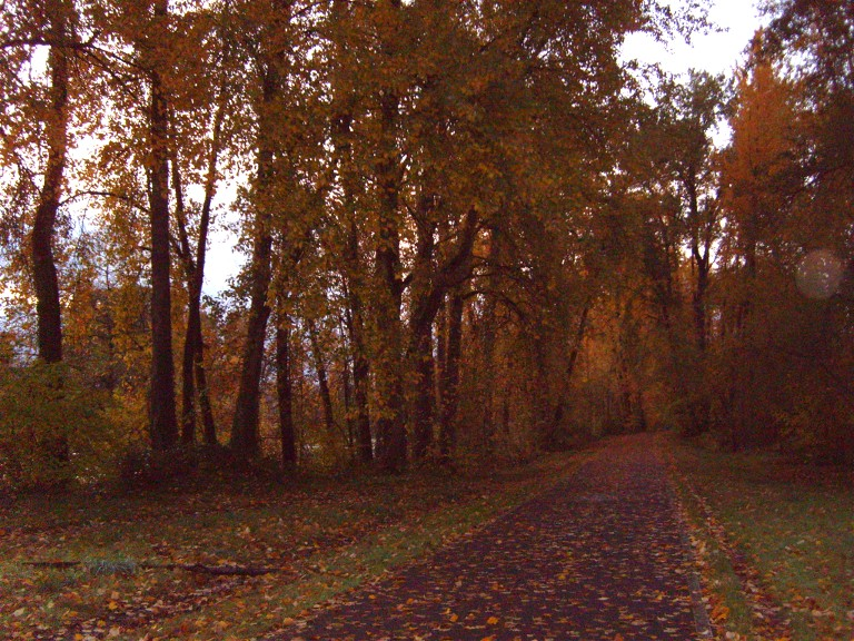 Bike path in November