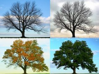 Four-seasons-of-the-year