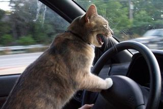 Cat-driving