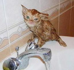 Bitter_kitten